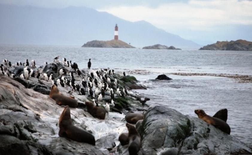 Navegación Canal Beagle: Isla de Lobos - Pájaros - Faro con trekking