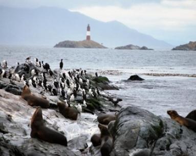 Navegación Canal Beagle Isla de Lobos y  Faro con trekking