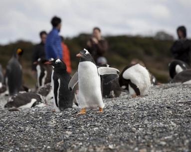 Navegación Pingüinera con caminata