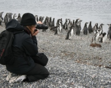 Penguin navigation with trekking